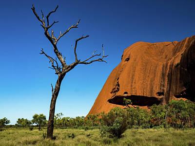 Photograph - Uluru Tree by Walt Sterneman