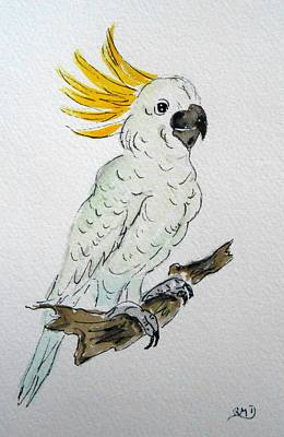 Umbrella Cockatoo Art Print by Rita Drolet