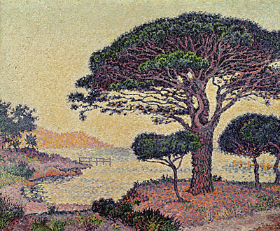 Pointillist Painting - Umbrella Pines At Caroubiers by Paul Signac