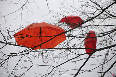 Photograph - Umbrella Tree Number 3 by John Meader