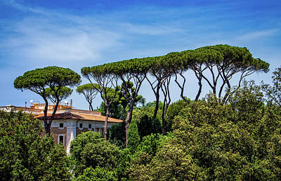 Photograph - Umbrella Trees In Rome by Carolyn Derstine
