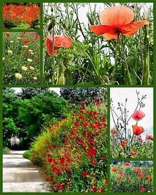 Photograph - Umbrian Red Poppy Collage by Dorothy Berry-Lound