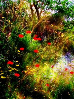 Photograph - Umbrian Wild Flowers 3 by Dorothy Berry-Lound