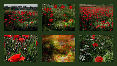 Photograph - Umbrian Wild Flowers 4 by Dorothy Berry-Lound