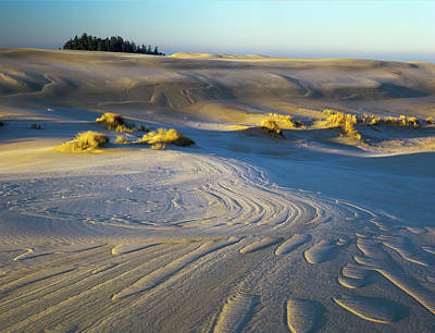 Photograph - Umpqua Dunes With Frost by Robert Potts