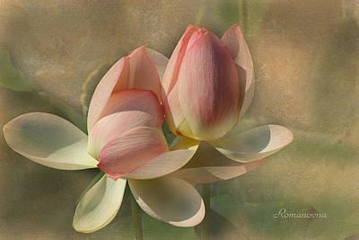 Lilies Royalty-Free and Rights-Managed Images - Un Baiser by Georgiana Romanovna