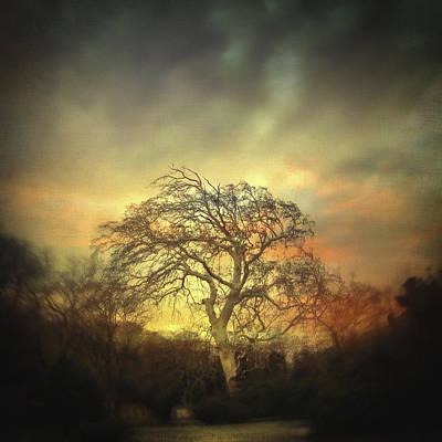 Bokeh Photograph - Un Dernier Crepuscule by Taylan Apukovska
