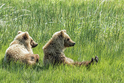 Photograph - Unbearably Cute - Bear Cubs, No. 5 by Belinda Greb