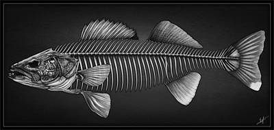 Pickerel Drawing - Undead Walleye by Nick Laferriere