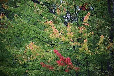 Photograph - Undecided Deciduous by Ellen Barron O'Reilly