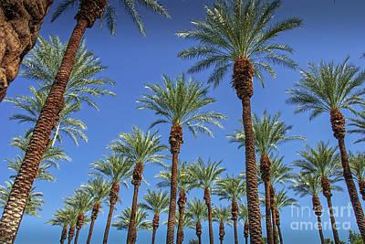 Photograph - Under 29 Palm Trees by David Zanzinger