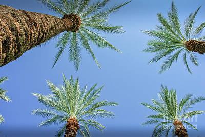 Photograph - Under A Canapy Of Palms by David Zanzinger