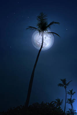 Photograph - Under A Coconut Moon by Mark Andrew Thomas