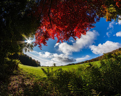 Photograph - Under A Red Autumn Maple by Chris Bordeleau