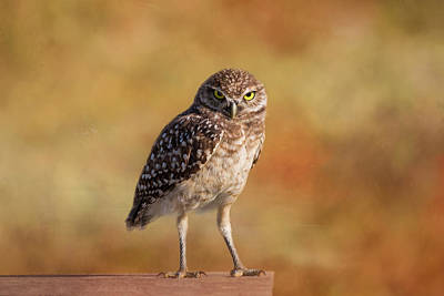 Burrowing Owl Wall Art - Photograph - Under A Watchful Eye by Kim Hojnacki