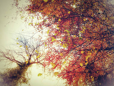 Photograph - Under An Autumn Sky by Andy Walsh