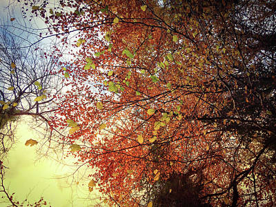 Photograph - Under An Autumn Sky - No.2 by Andy Walsh