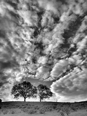 Photograph - Under Cover In Black And White by Tara Turner