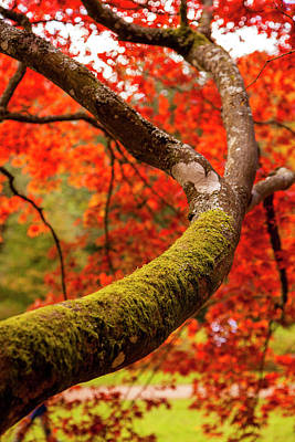 Photograph - Under Fall II by Stewart Scott
