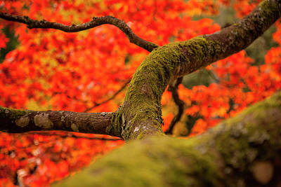 Photograph - Under Fall by Stewart Scott