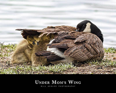 Art Print featuring the photograph Under Mom's Wing by Bill Kesler
