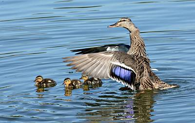 Baby Mallards Photograph - Under My Wings by Fraida Gutovich