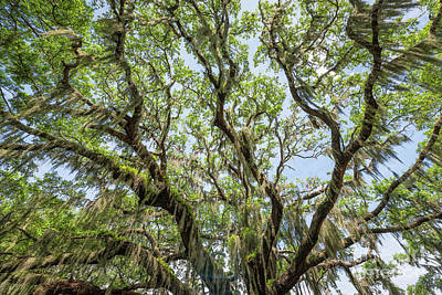 Photograph - Under Spanish Moss  by Michael Ver Sprill