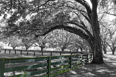 Photograph - Under That Old Oak Tree by Carlos Diaz