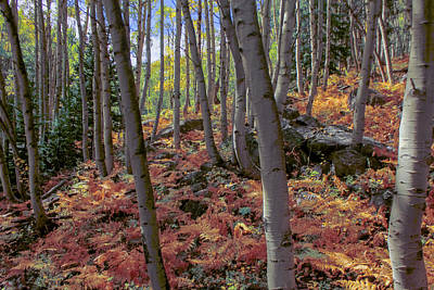 Photograph - Under The Aspens by Perspective Imagery
