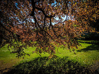 Photograph - Under The Autograph Tree In County Galway's Coole Park by James Truett