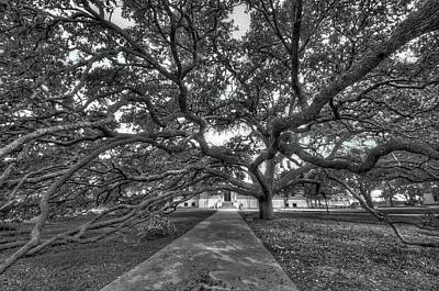 Under The Century Tree - Black And White Art Print
