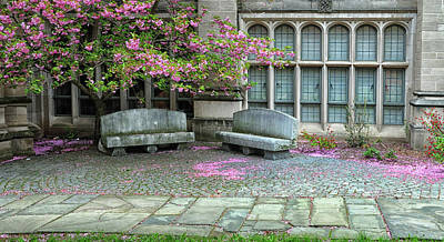 Photograph - Under The Cherry Blossoms At Yale University by Dave Mills