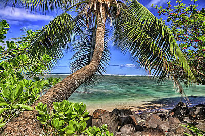 Photograph - Under The Coconut Tree by Brad Granger