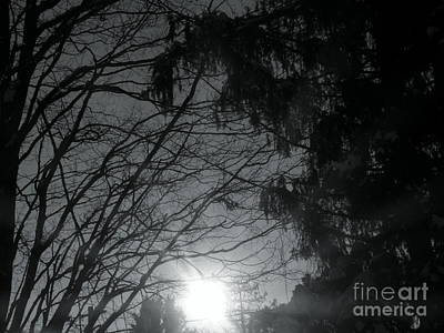 Tree Photograph - Under The December Sun 3 by Abstract Angel Artist Stephen K