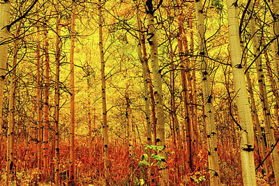 Photograph - Under The Golden Canopy by Greg Norrell