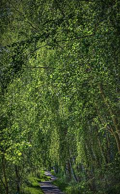 Photograph - Under The Green #h5 by Leif Sohlman