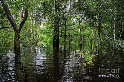 Photograph - Under The Jungle Canopy by Nareeta Martin