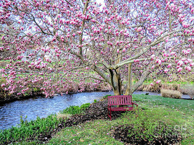 Photograph - Under The Magnolia Tree by Janice Drew