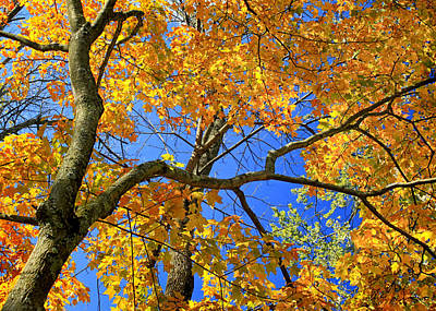 Photograph - Under The Maple Tree by Carolyn Derstine