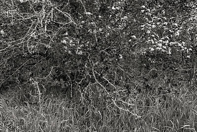 Photograph - Under The Old Apple Tree by Jim Vance