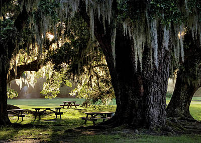 Photograph - Under The Old Oak Tree by Jim Hill