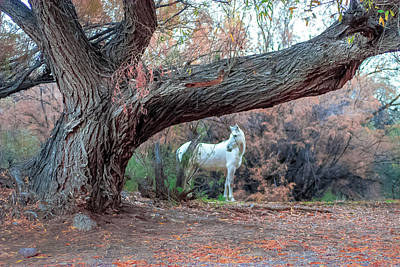 Winter Animals Rights Managed Images - Under the Old Oak Tree Royalty-Free Image by Ronald Hunt