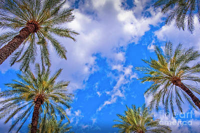 Photograph - Under The Palm Trees Looking Up by David Zanzinger
