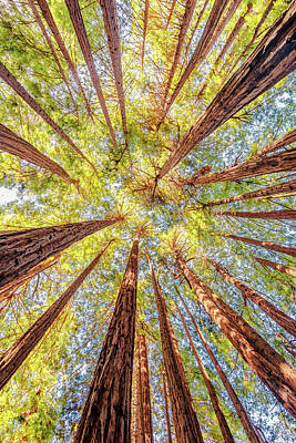 Coastal Forest Photograph - Under The Redwoods by Aron Kearney