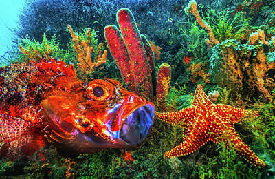 Photograph - Under The Sea At The Reef by Debra and Dave Vanderlaan
