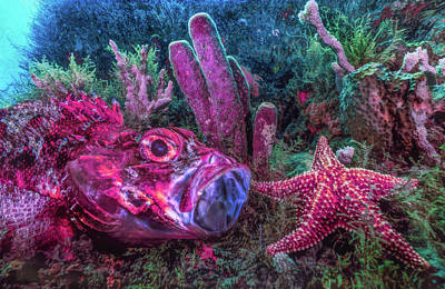 Photograph - Under The Sea At The Reef Pastel Color Hues by Debra and Dave Vanderlaan