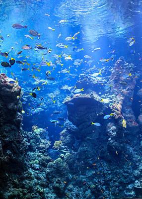 Photograph - Under The Sea by Bonnie Follett