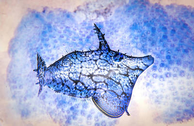 Photograph - Under The Sea Colorful Watercolor Art #11 by Debra and Dave Vanderlaan