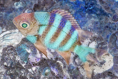 Photograph - Under The Sea Colorful Watercolor Art #15 by Debra and Dave Vanderlaan