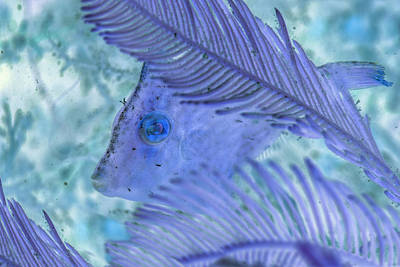 Photograph - Under The Sea Colorful Watercolor Art #17 by Debra and Dave Vanderlaan